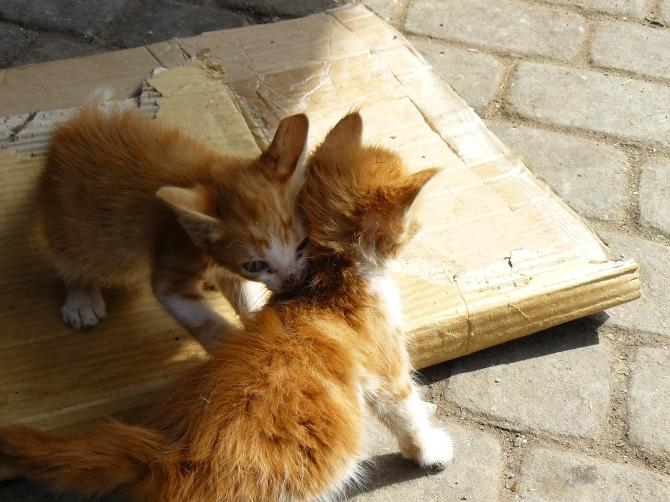 Deux chatons dans les souks de Marrakech