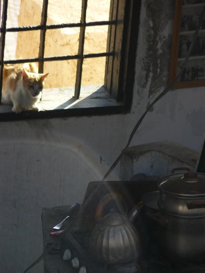 Mais qu'y a-t-il à manger dans cette gamelle d'une cuisine d'une maison d'Essaouira ?