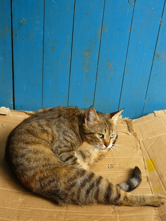 A Essaouira, posé sur un carton, mais prêt à déménager.