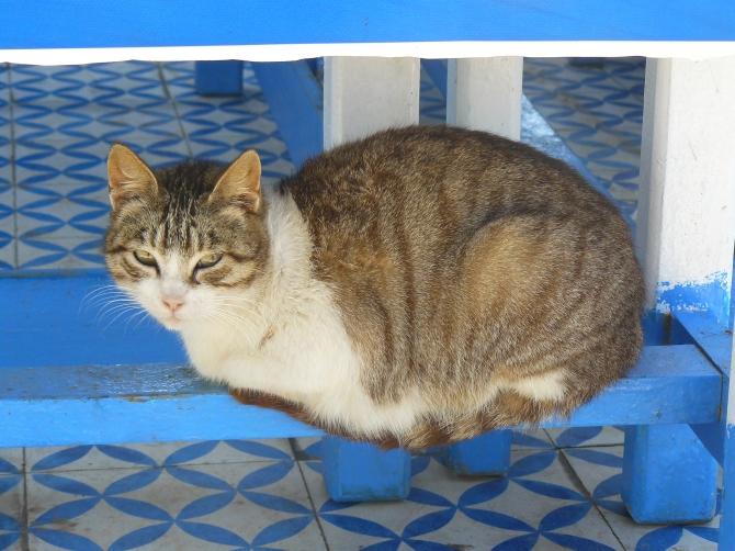 Une bonne place, sur la terrasse du Taros, bar branché d'Essaouira.