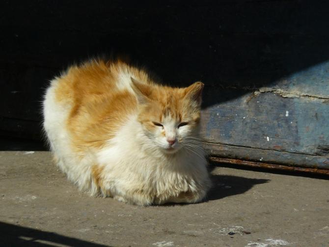 Ce chat marrakchi semble avoir posé ses pattes.