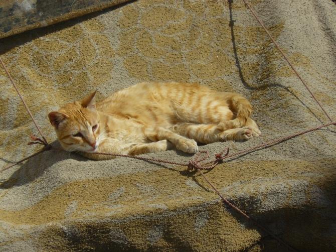 Dure dure, la vie d'un chat à Marrakech...