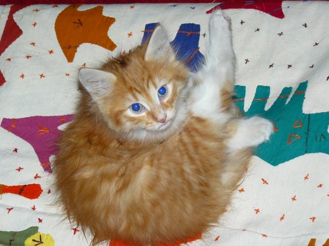 Ce petit chat a trouvé sa place dans un grand magasin de meubles de la médina de Marrakech.