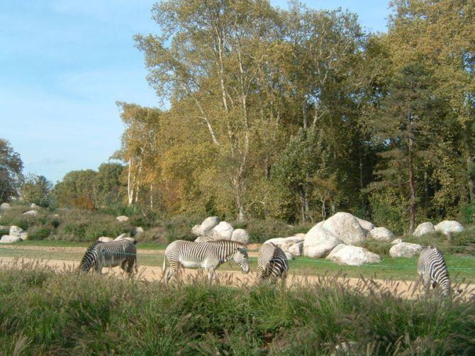 Pour voir des zèbres à Lyon, rendez-vous dans la Plaine africaine du parc de la Tête d'Or.